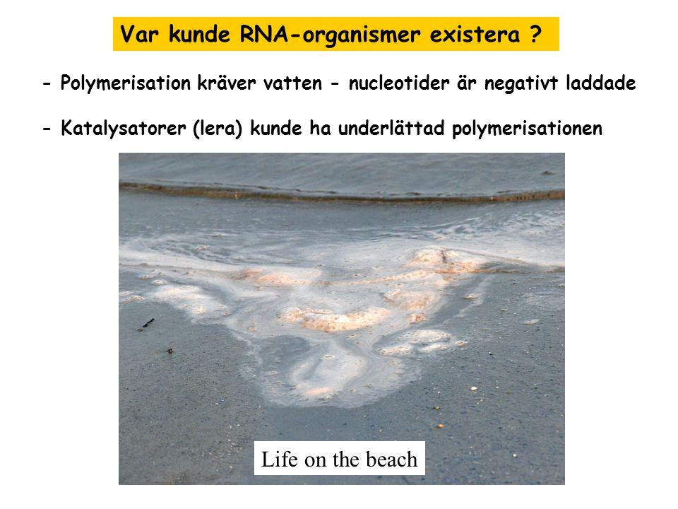 - Polymerisation kräver vatten - nucleotider är negativt laddade - Katalysatorer (lera) kunde ha underlättad polymerisationen Var kunde RNA-organismer existera .