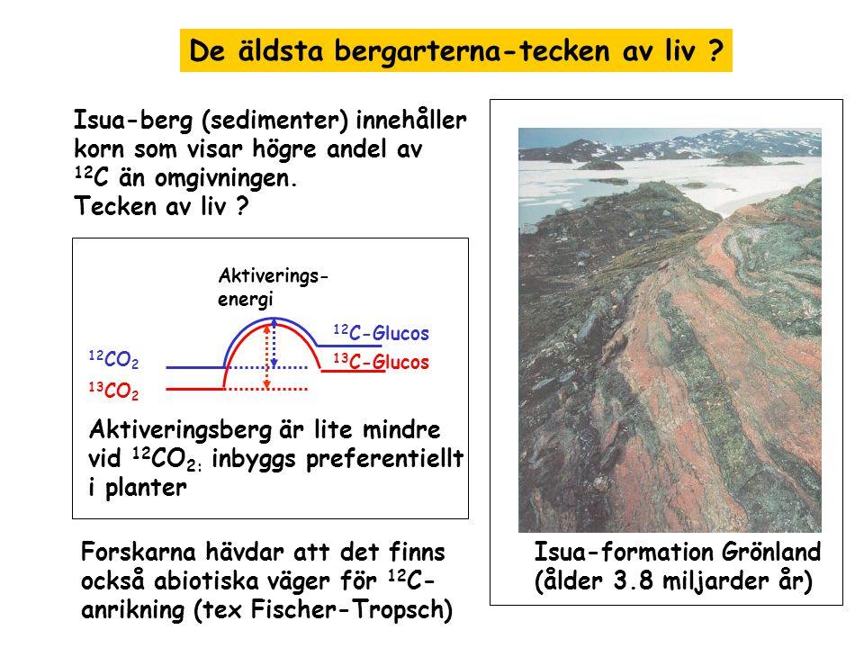 Första otvivelaktiga tecken av liv Stromatoliter Stromatolitkultur i Australien - sedimenter bildad av biofilmer av mikroorganismer (t.ex.