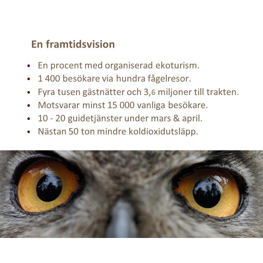 En framtidsvision En procent med organiserad ekoturism. 1 400 besökare via hundra fågelresor. Fyra tusen gästnätter och 3, 6 miljoner till trakten. Mo