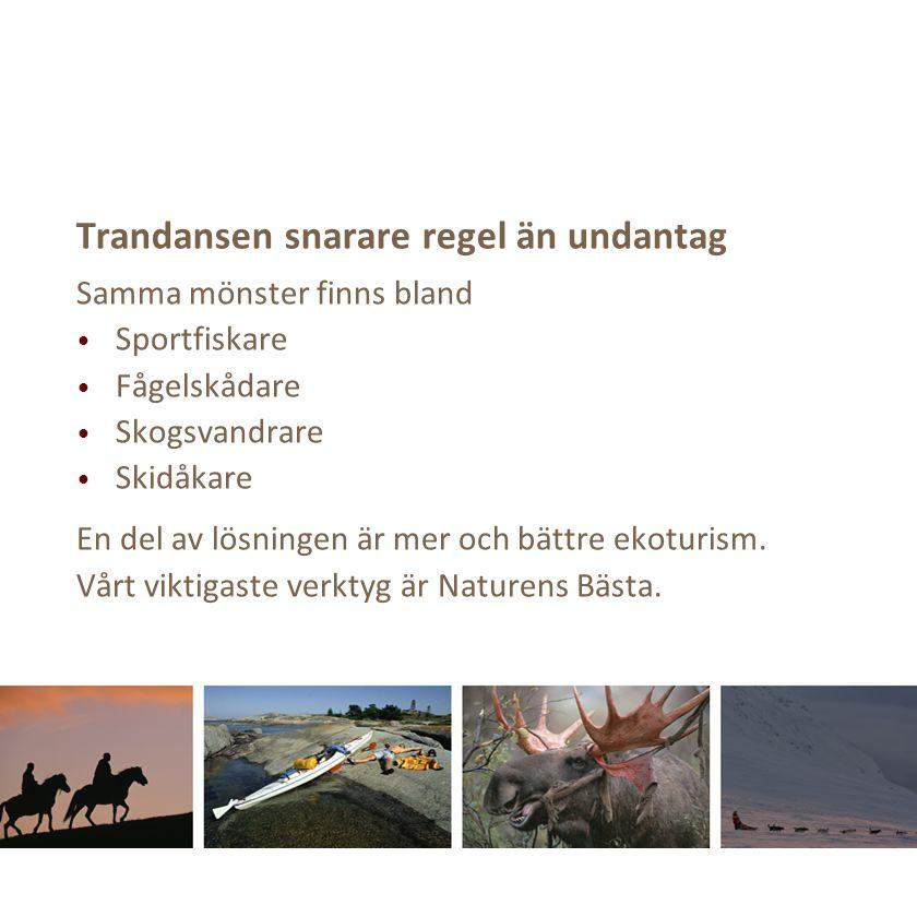 Trandansen snarare regel än undantag Samma mönster finns bland Sportfiskare Fågelskådare Skogsvandrare Skidåkare En del av lösningen är mer och bättre ekoturism.