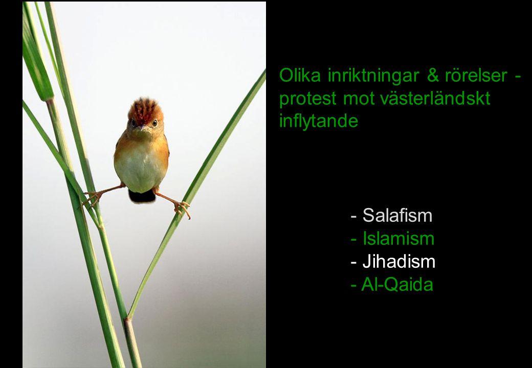 Olika inriktningar & rörelser - protest mot västerländskt inflytande - Salafism - Islamism - Jihadism - Al-Qaida