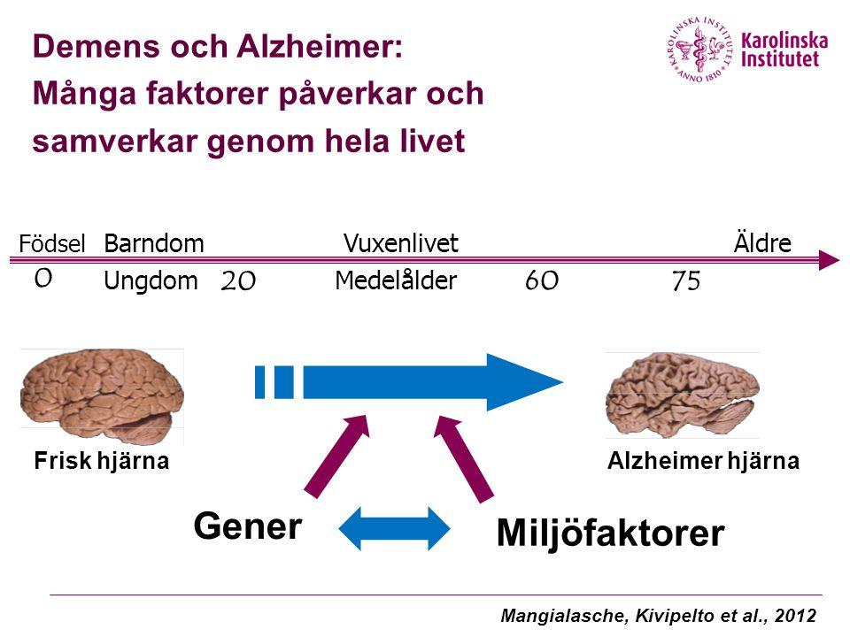 Frisk hjärnaAlzheimer hjärna Gener Miljöfaktorer Demens och Alzheimer: Många faktorer påverkar och samverkar genom hela livet Födsel Barndom Vuxenlive