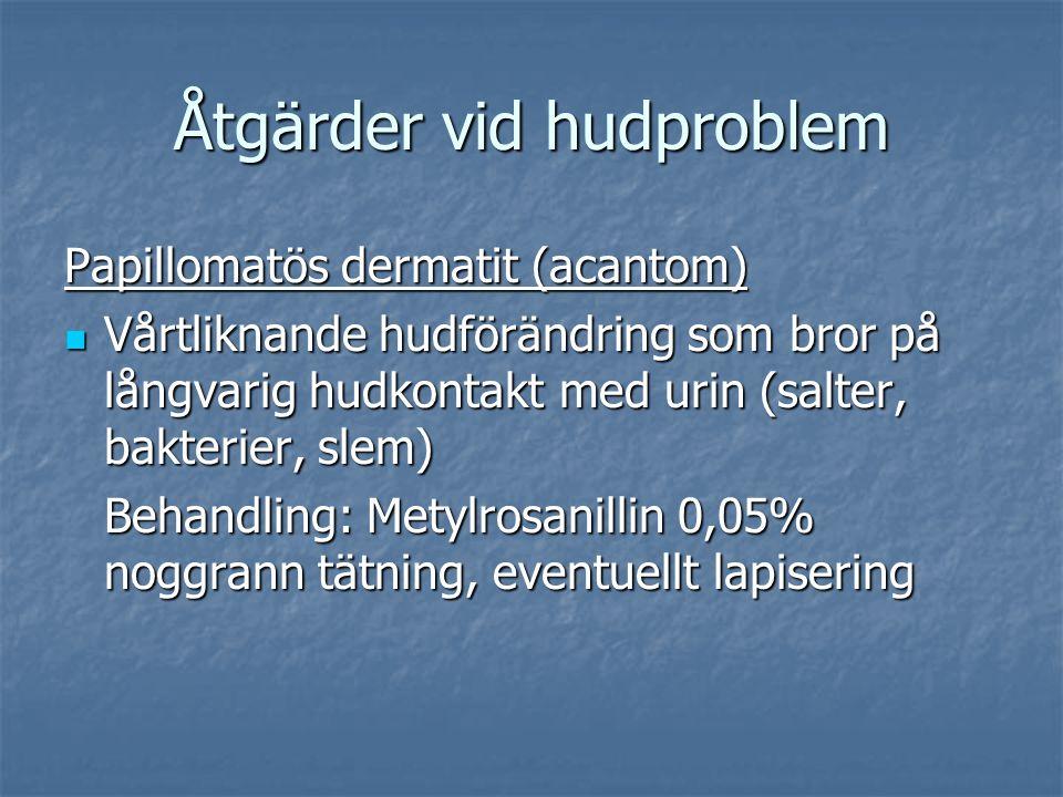 Åtgärder vid hudproblem Papillomatös dermatit (acantom) Vårtliknande hudförändring som bror på långvarig hudkontakt med urin (salter, bakterier, slem) Vårtliknande hudförändring som bror på långvarig hudkontakt med urin (salter, bakterier, slem) Behandling: Metylrosanillin 0,05% noggrann tätning, eventuellt lapisering