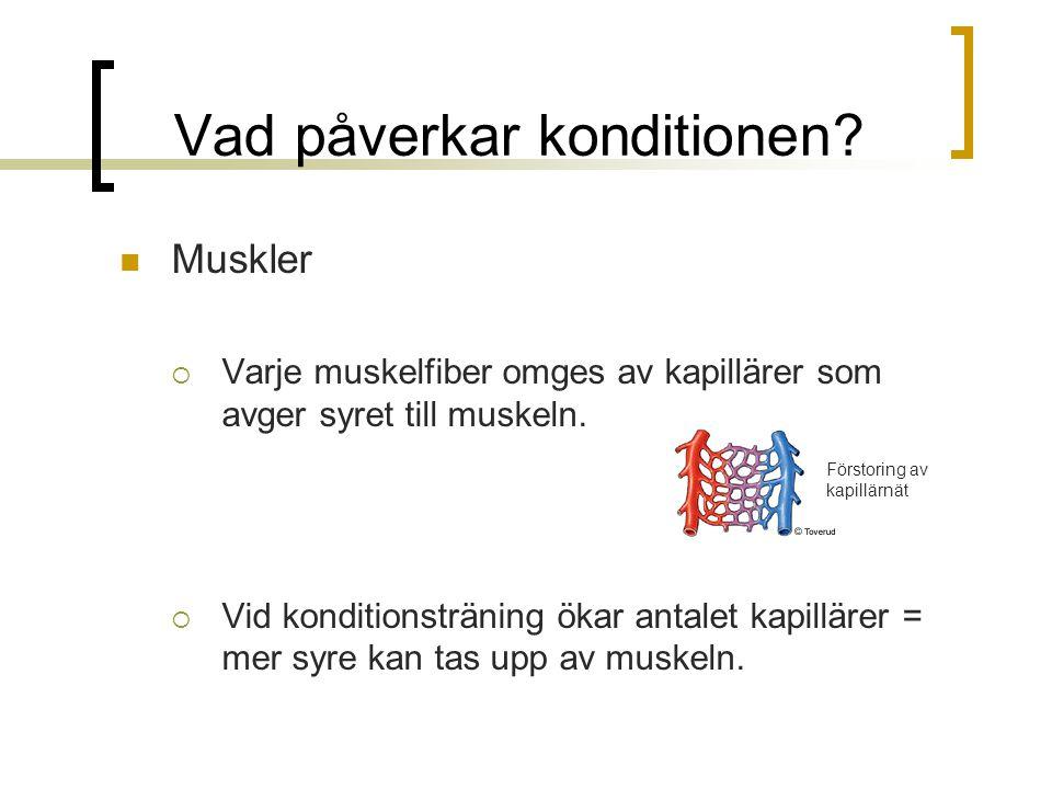 Vad påverkar konditionen? Muskler  Varje muskelfiber omges av kapillärer som avger syret till muskeln.  Vid konditionsträning ökar antalet kapilläre