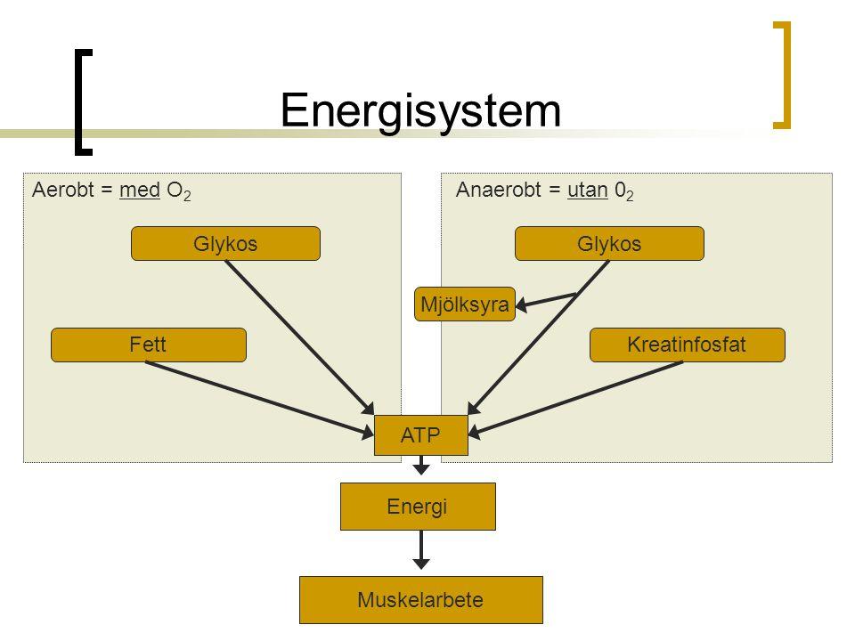 Energisystem Energi Muskelarbete ATP Glykos Kreatinfosfat Glykos Fett Mjölksyra Aerobt = med O 2 Anaerobt = utan 0 2