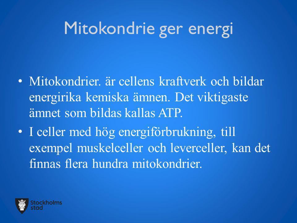 Mitokondrie ger energi Mitokondrier. är cellens kraftverk och bildar energirika kemiska ämnen. Det viktigaste ämnet som bildas kallas ATP. I celler me
