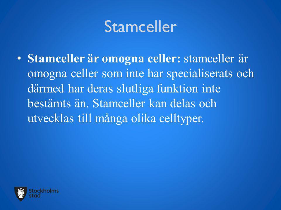 Stamceller Stamceller är omogna celler: stamceller är omogna celler som inte har specialiserats och därmed har deras slutliga funktion inte bestämts ä