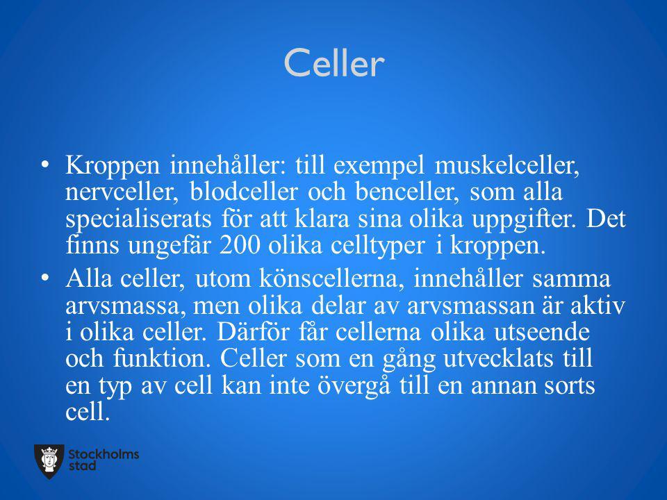 Celler Kroppen innehåller: till exempel muskelceller, nervceller, blodceller och benceller, som alla specialiserats för att klara sina olika uppgifter