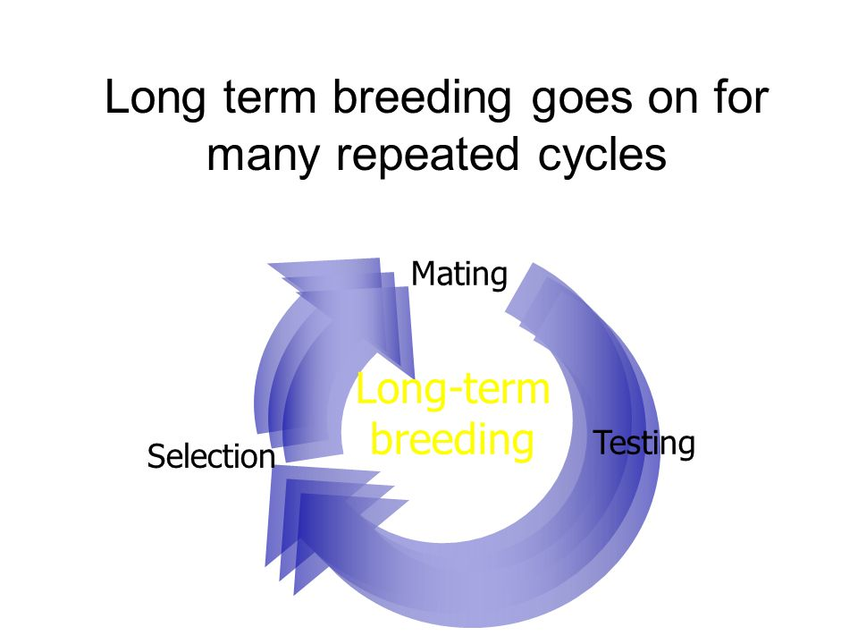 Our program breeding cycler studies what happens in one complete cycle Long-term breeding Selection Mating Testing