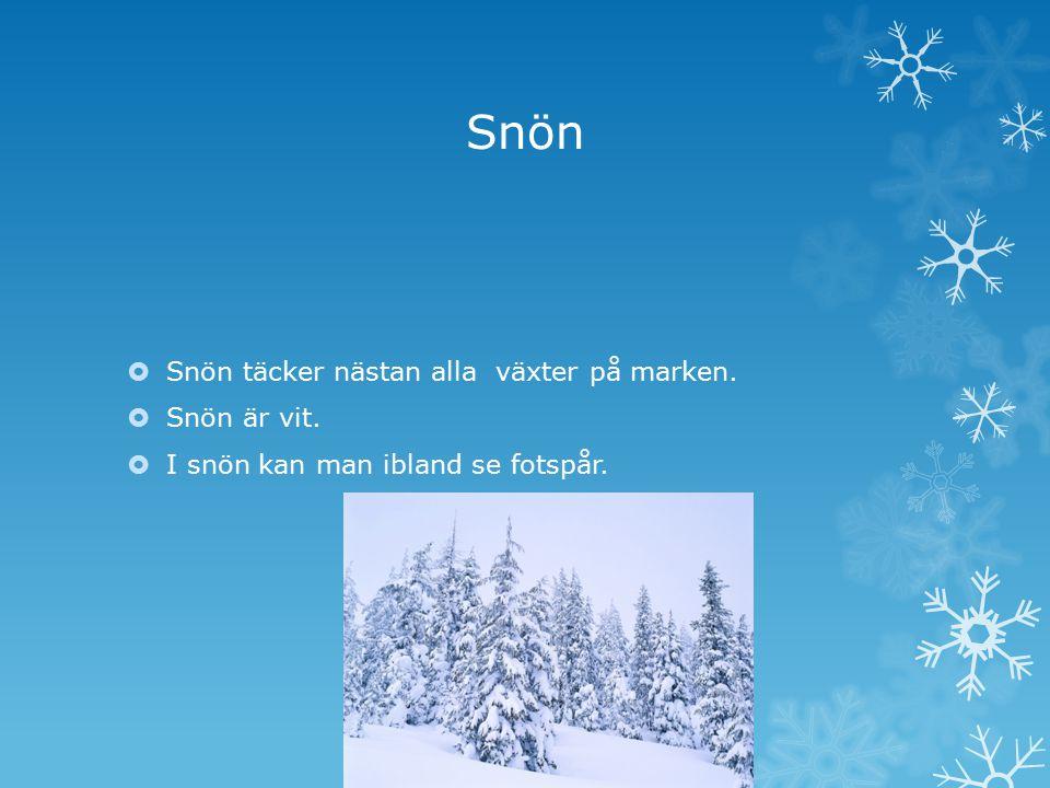 Snön  Snön täcker nästan alla växter på marken.  Snön är vit.  I snön kan man ibland se fotspår.