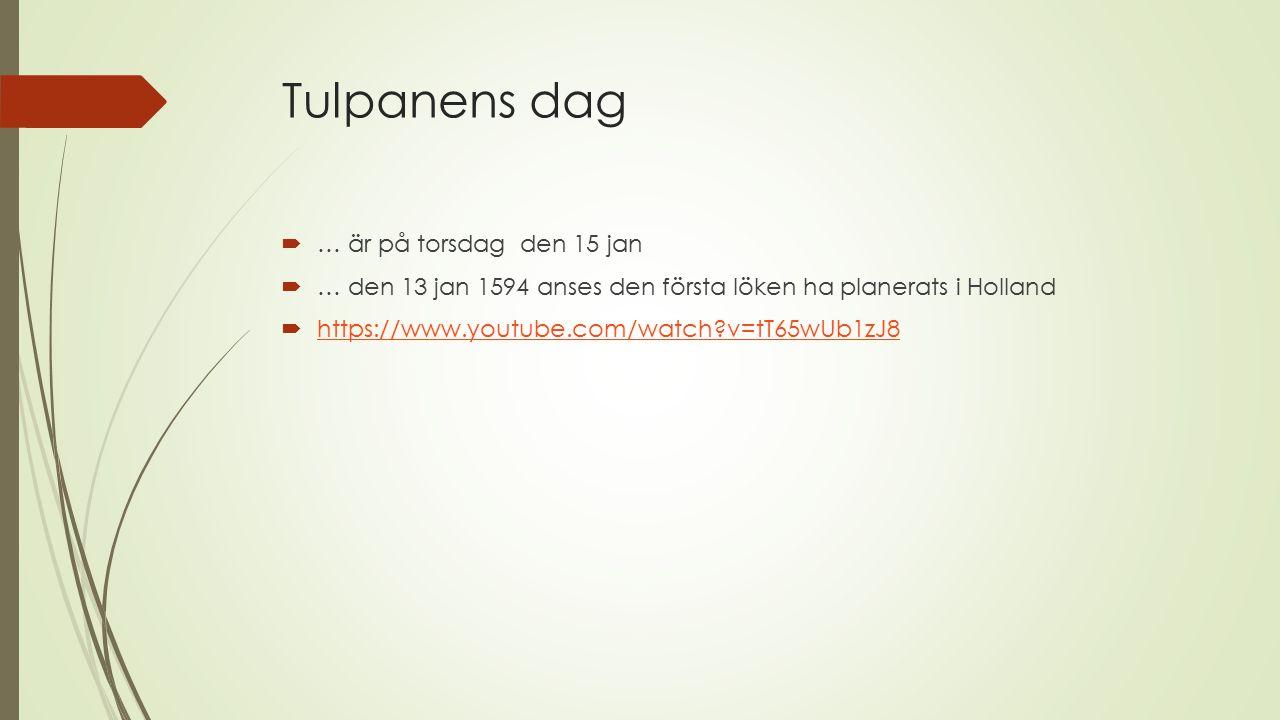 Tulpanens dag  … är på torsdag den 15 jan  … den 13 jan 1594 anses den första löken ha planerats i Holland  https://www.youtube.com/watch?v=tT65wUb