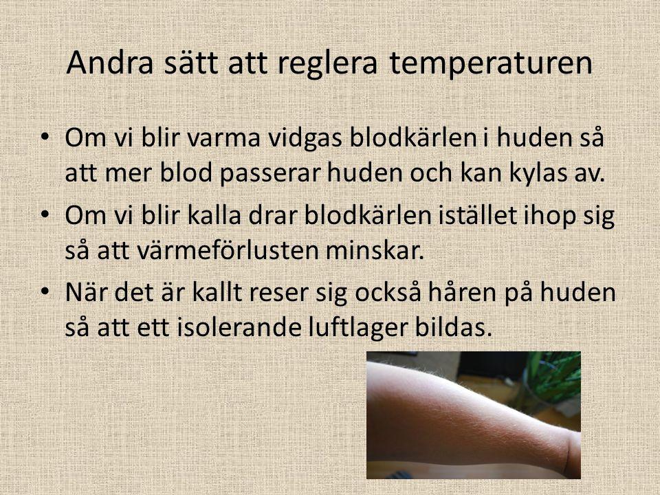 Andra sätt att reglera temperaturen Om vi blir varma vidgas blodkärlen i huden så att mer blod passerar huden och kan kylas av. Om vi blir kalla drar