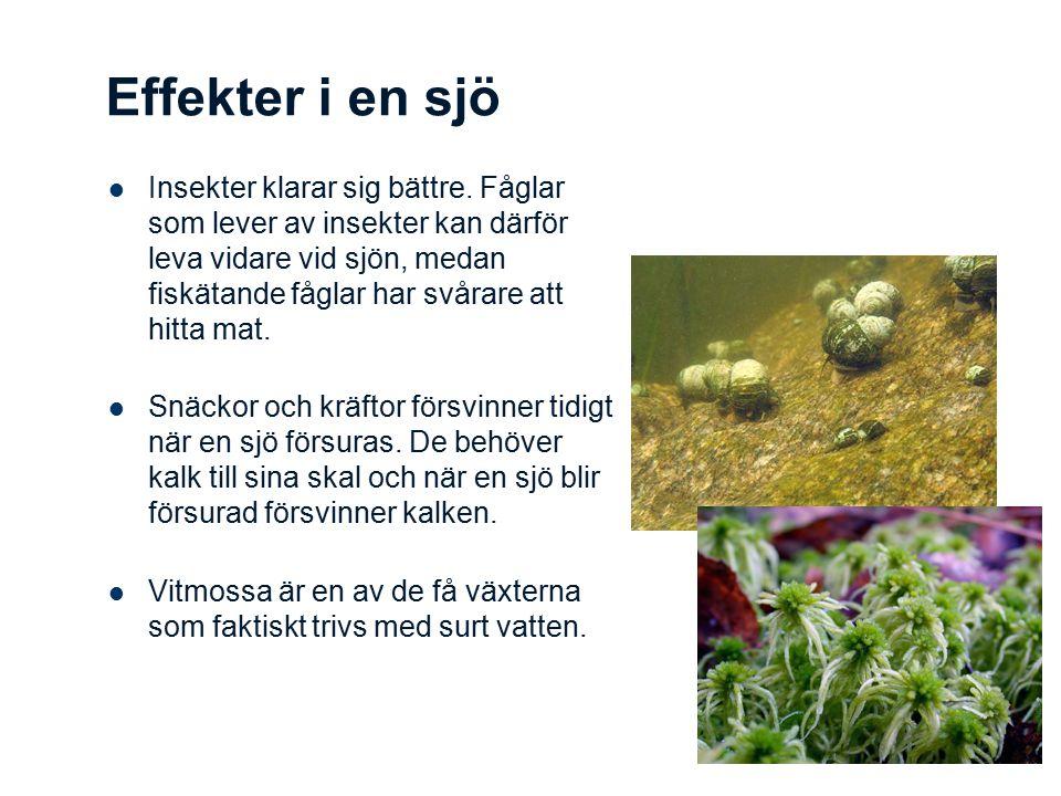Effekter i en sjö Insekter klarar sig bättre. Fåglar som lever av insekter kan därför leva vidare vid sjön, medan fiskätande fåglar har svårare att hi