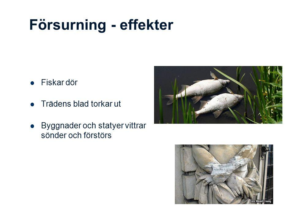 Försurning - effekter Fiskar dör Trädens blad torkar ut Byggnader och statyer vittrar sönder och förstörs