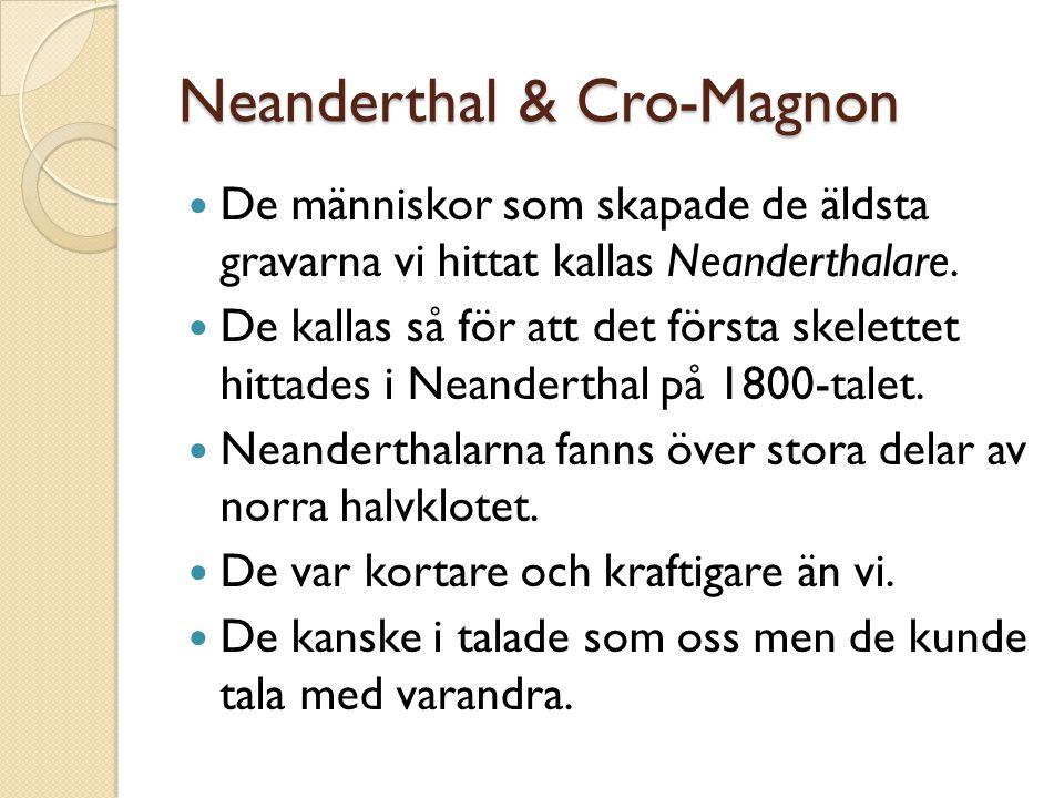Neanderthal & Cro-Magnon De människor som skapade de äldsta gravarna vi hittat kallas Neanderthalare. De kallas så för att det första skelettet hittad