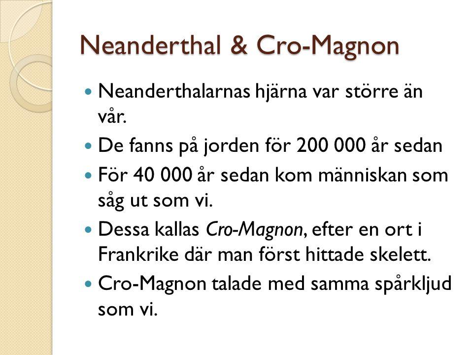 Neanderthal & Cro-Magnon Neanderthalarnas hjärna var större än vår. De fanns på jorden för 200 000 år sedan För 40 000 år sedan kom människan som såg