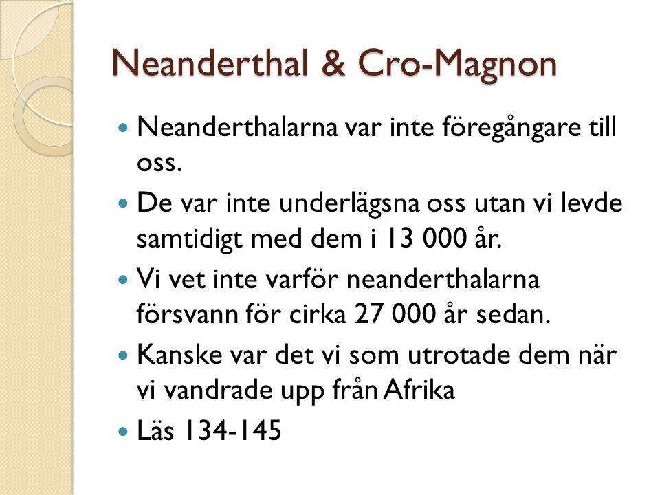 Neanderthal & Cro-Magnon Neanderthalarna var inte föregångare till oss. De var inte underlägsna oss utan vi levde samtidigt med dem i 13 000 år. Vi ve