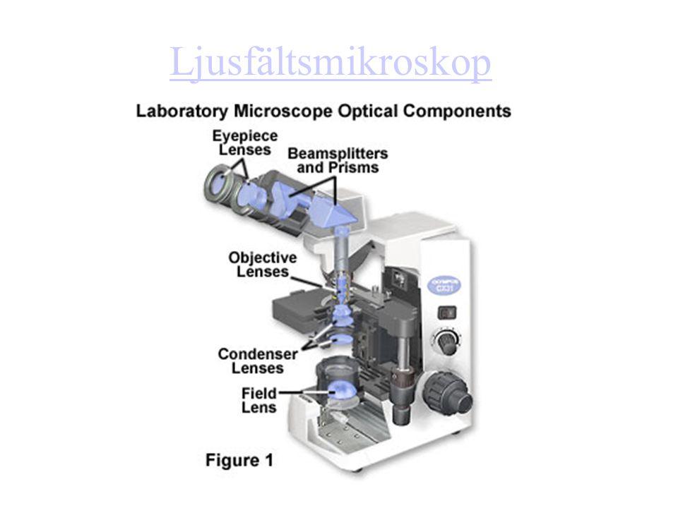 Ljusfältsmikroskop