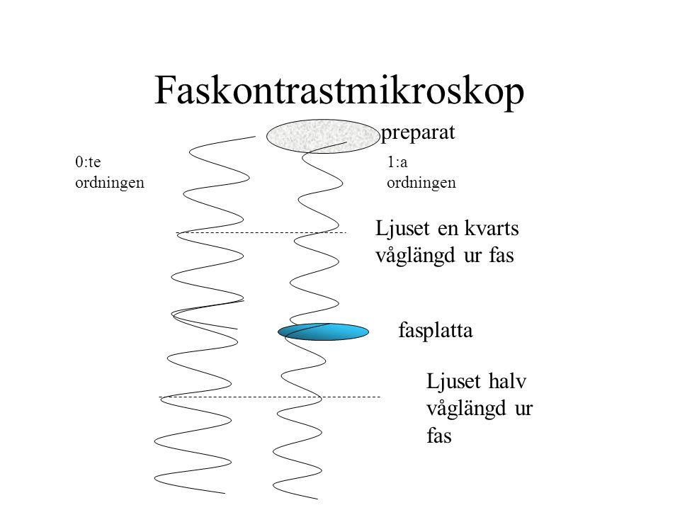 Faskontrastmikroskop Ljuset halv våglängd ur fas 0:te ordningen 1:a ordningen Ljuset en kvarts våglängd ur fas preparat fasplatta