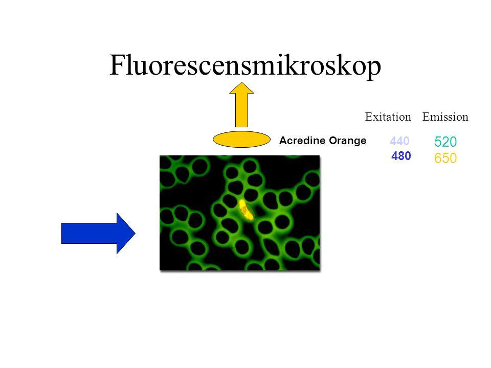 Fluorescensmikroskop Acredine Orange 440 480 520 650 ExitationEmission