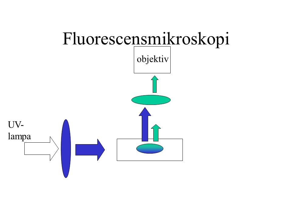 Fluorescensmikroskopi UV- lampa objektiv