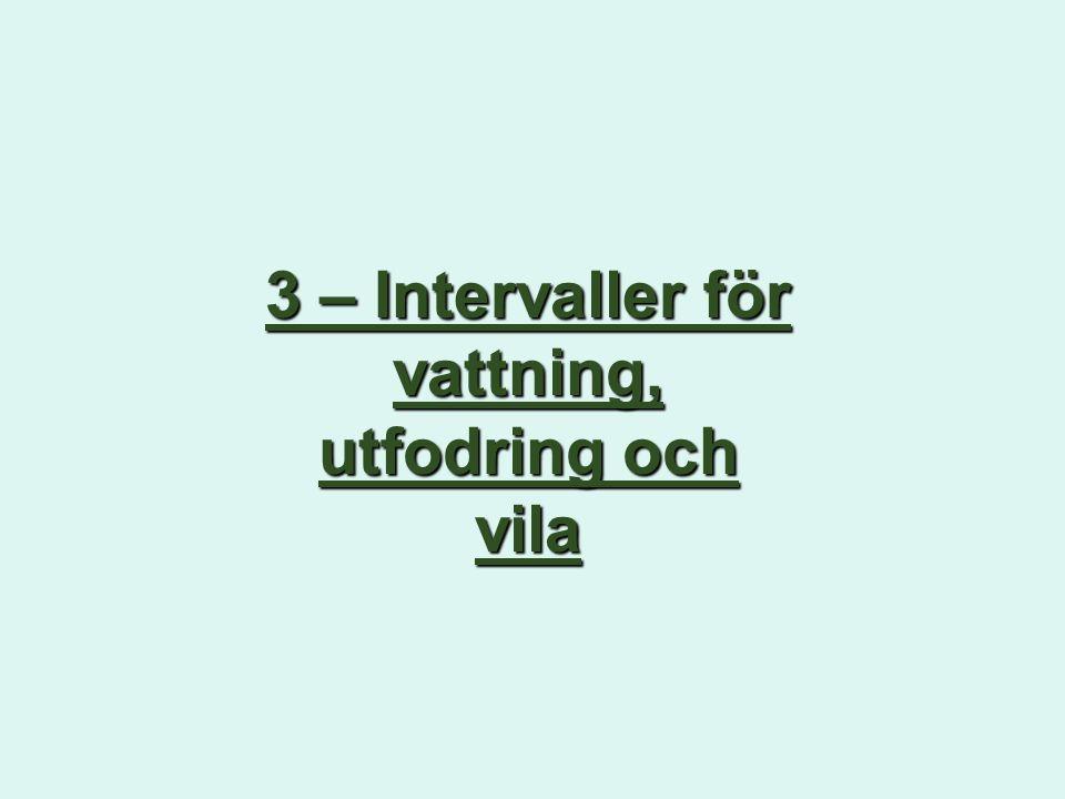 3 – Intervaller för vattning, utfodring och vila