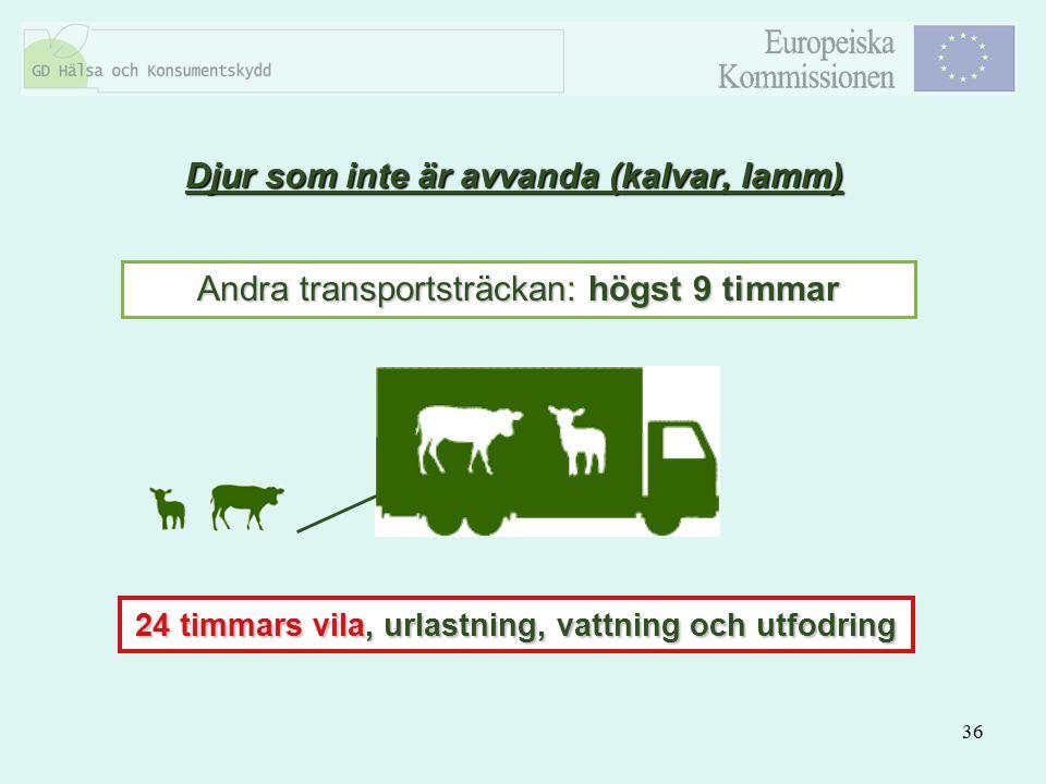 36 Djur som inte är avvanda (kalvar, lamm) Andra transportsträckan: högst 9 timmar 24 timmars vila, urlastning, vattning och utfodring