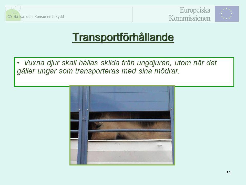 51 Vuxna djur skall hållas skilda från ungdjuren, utom när det gäller ungar som transporteras med sina mödrar. Transportförhållande