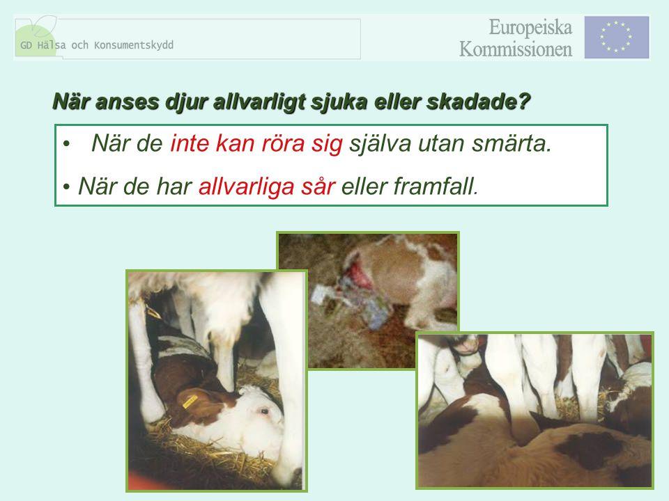 8 När de inte kan röra sig själva utan smärta. När de har allvarliga sår eller framfall. När anses djur allvarligt sjuka eller skadade?