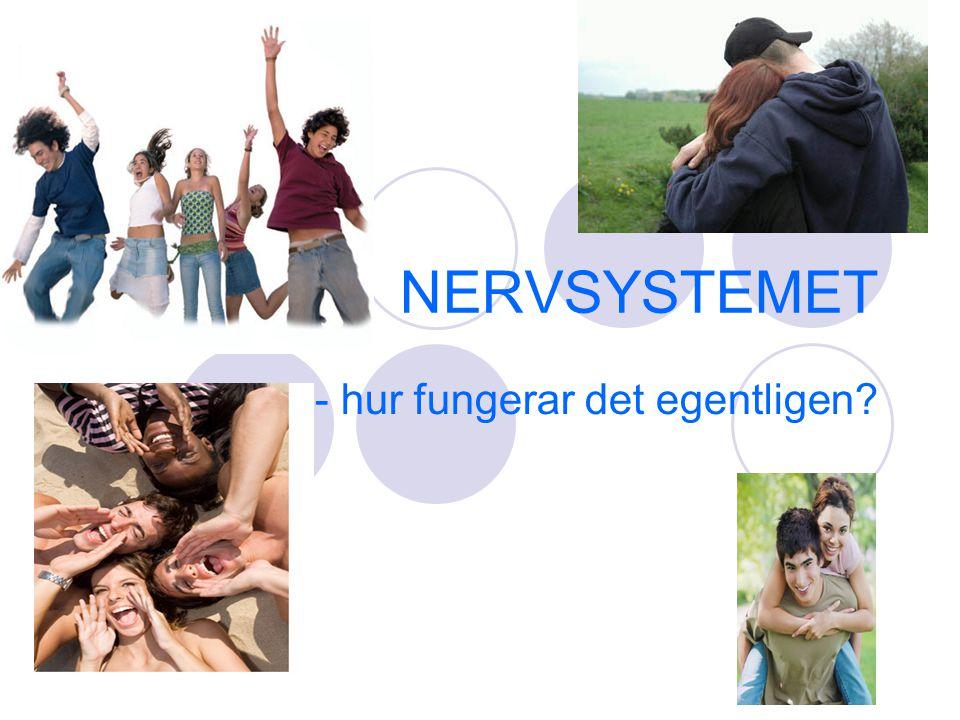 NERVSYSTEMET - hur fungerar det egentligen?