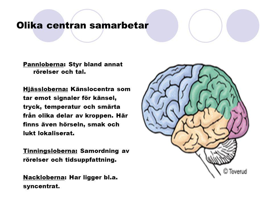 Olika centran samarbetar Pannloberna: Styr bland annat rörelser och tal. Hjässloberna: Känslocentra som tar emot signaler för känsel, tryck, temperatu