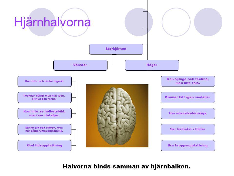 Hjärnhalvorna Storhjärnan VänsterHöger Kan tala och tänka logiskt Tecknar dåligt men kan läsa, skriva och räkna. Kan inte se helhetsbild, men ser deta