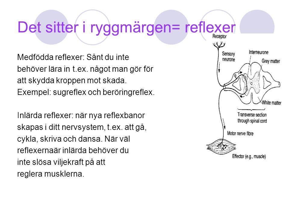 Det sitter i ryggmärgen= reflexer Medfödda reflexer: Sånt du inte behöver lära in t.ex. något man gör för att skydda kroppen mot skada. Exempel: sugre