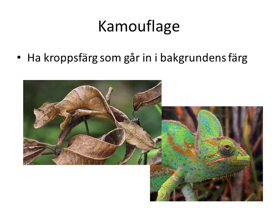 Kamouflage Ha kroppsfärg som går in i bakgrundens färg