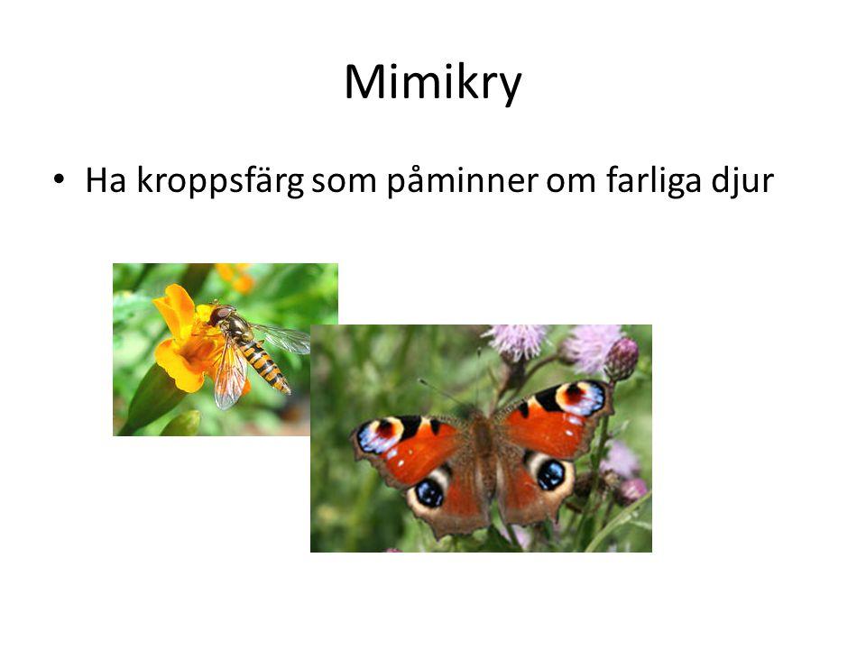 Mimikry Ha kroppsfärg som påminner om farliga djur
