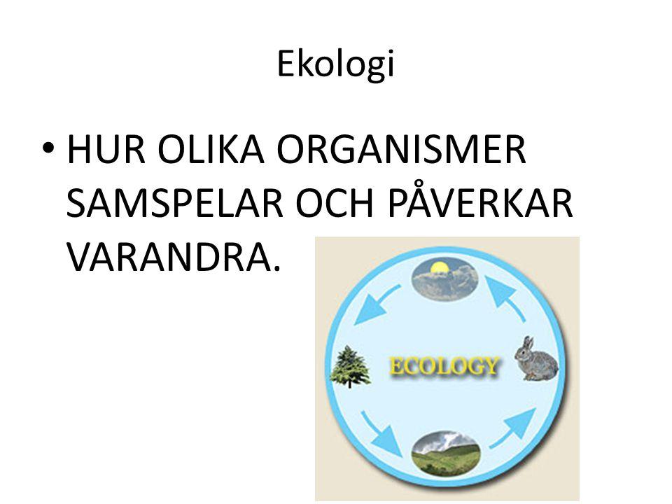 Ekologi HUR OLIKA ORGANISMER SAMSPELAR OCH PÅVERKAR VARANDRA.