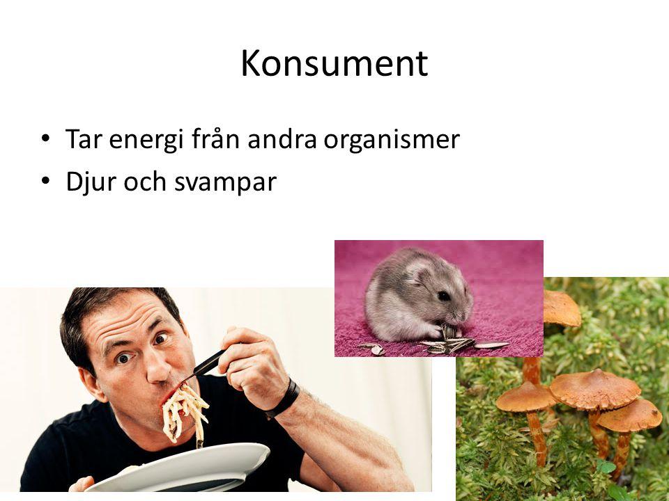 Konkurrens Mellan djur – Olika miljöer – Föda – Partner – Vatten