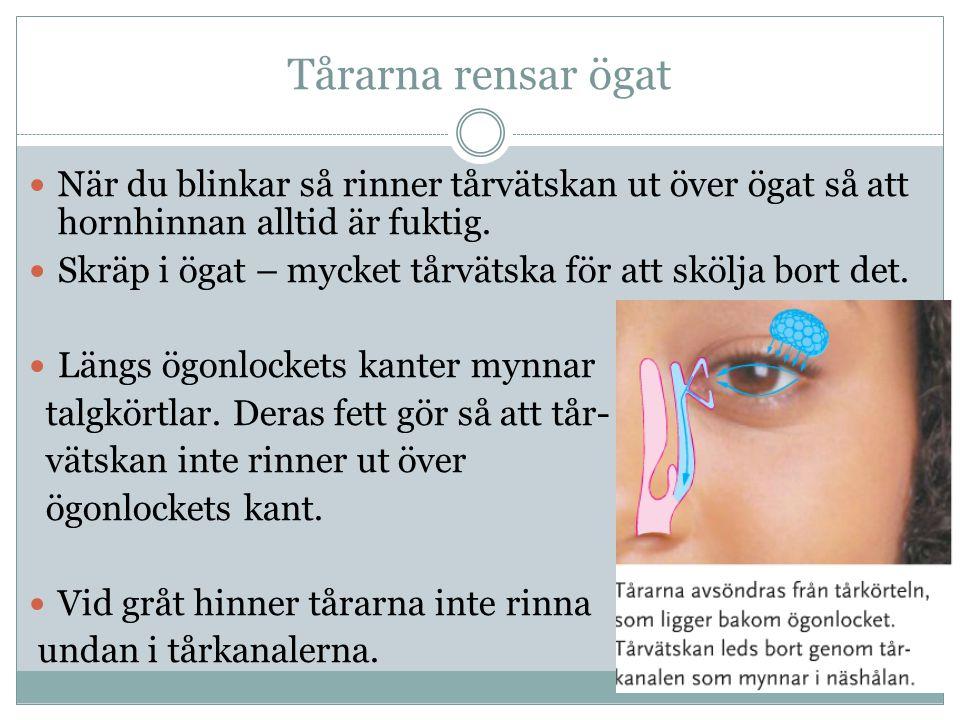 Tårarna rensar ögat När du blinkar så rinner tårvätskan ut över ögat så att hornhinnan alltid är fuktig. Skräp i ögat – mycket tårvätska för att skölj