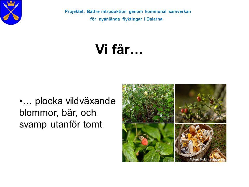 Foton: Multimediabyrån … plocka vildväxande blommor, bär, och svamp utanför tomt Projektet: Bättre introduktion genom kommunal samverkan för nyanlända