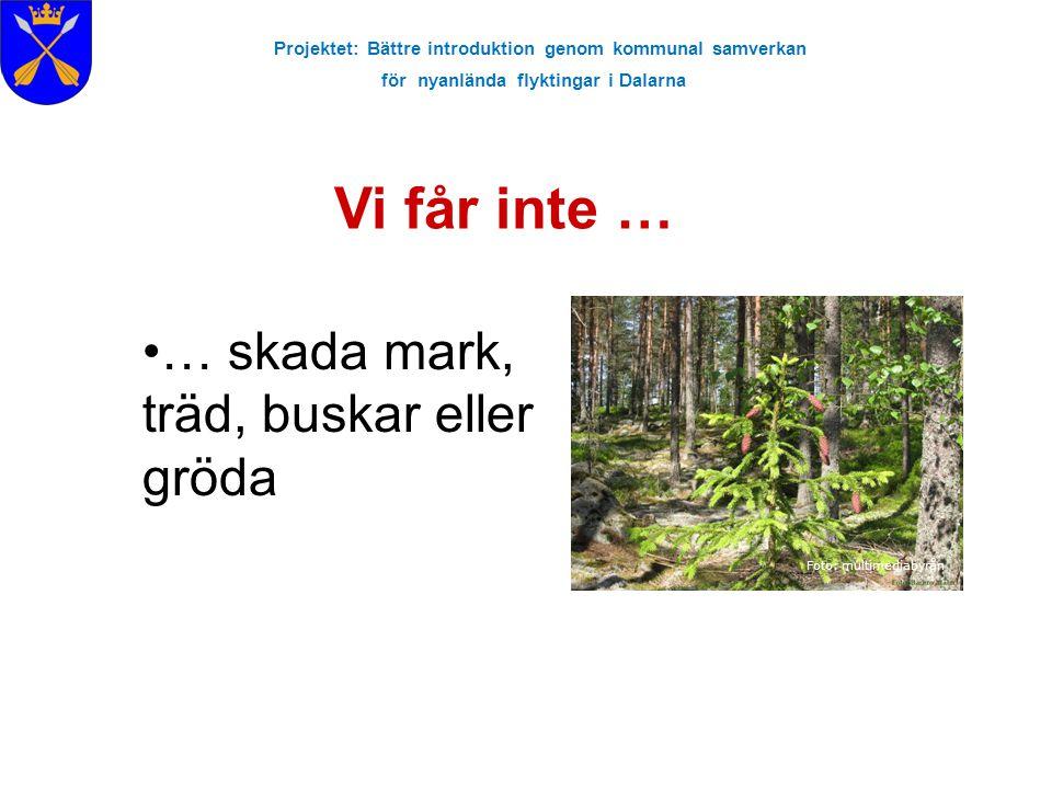 Projektet: Bättre introduktion genom kommunal samverkan för nyanlända flyktingar i Dalarna Vi får inte … Foto: multimediabyrån … skada mark, träd, bus