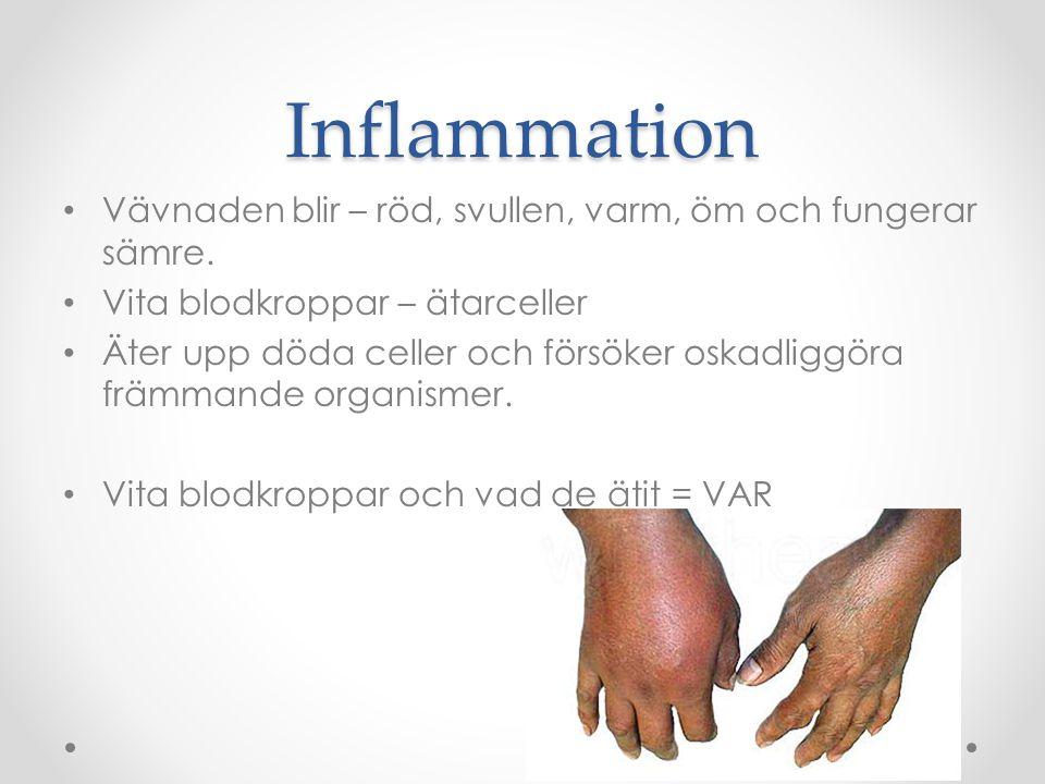 Inflammation Vävnaden blir – röd, svullen, varm, öm och fungerar sämre. Vita blodkroppar – ätarceller Äter upp döda celler och försöker oskadliggöra f