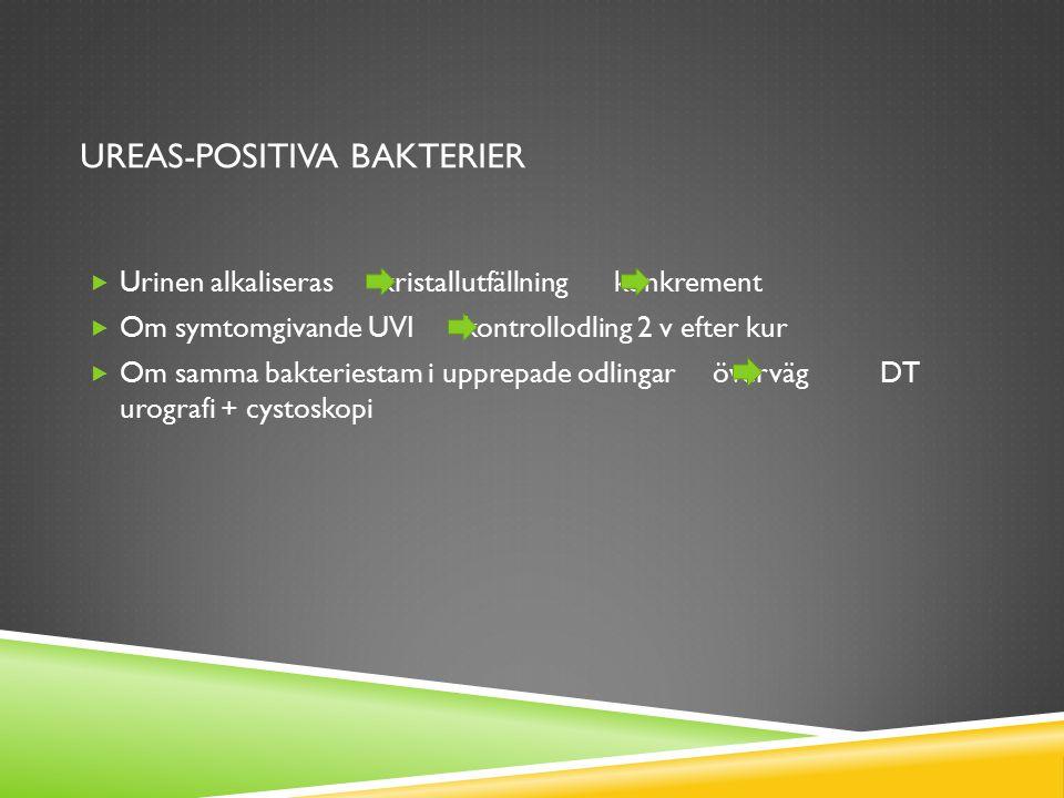 UREAS-POSITIVA BAKTERIER  Urinen alkaliseras kristallutfällning konkrement  Om symtomgivande UVI kontrollodling 2 v efter kur  Om samma bakteriesta