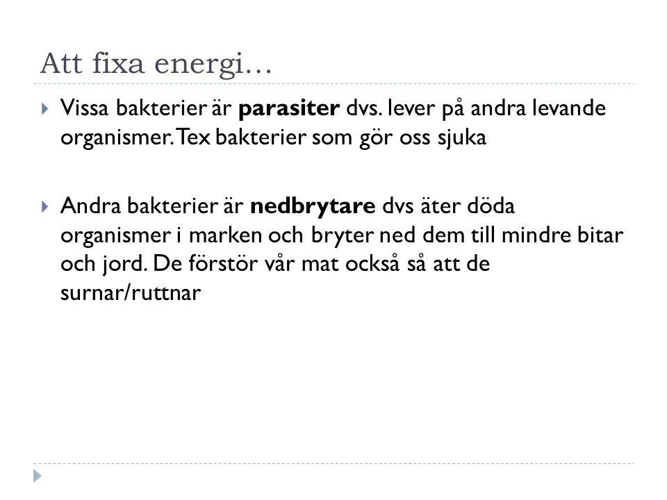 Att fixa energi…  Vissa bakterier är parasiter dvs. lever på andra levande organismer. Tex bakterier som gör oss sjuka  Andra bakterier är nedbrytar
