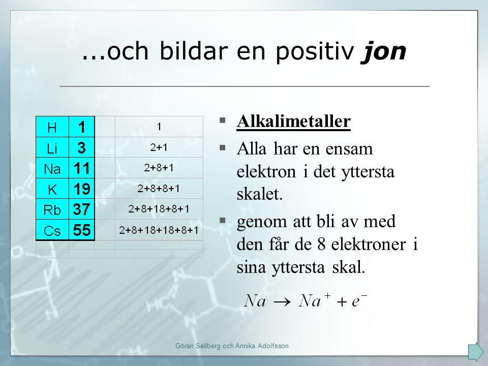 ...och bildar en positiv jon  Alkalimetaller  Alla har en ensam elektron i det yttersta skalet.