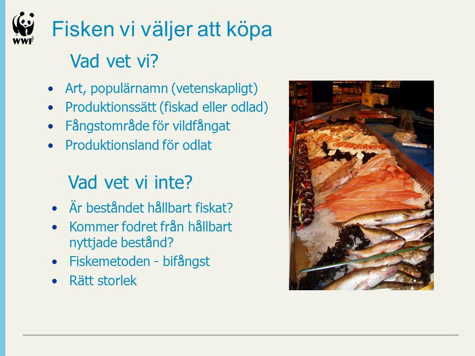 Fisken vi väljer att köpa Art, populärnamn (vetenskapligt) Produktionssätt (fiskad eller odlad) Fångstområde för vildfångat Produktionsland för odlat Vad vet vi inte.