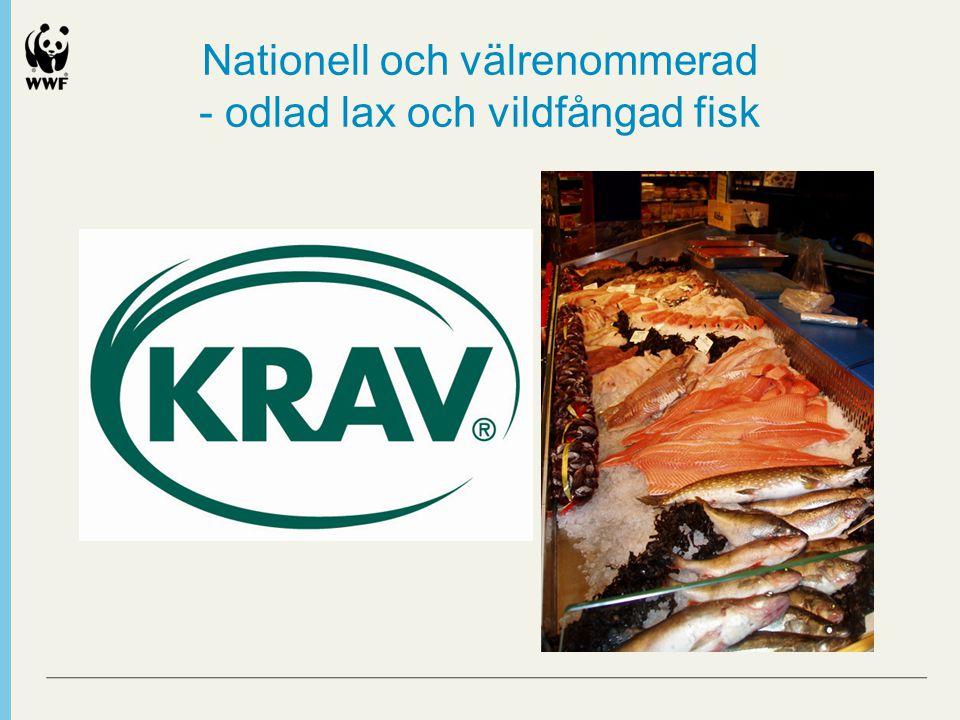 Nationell och välrenommerad - odlad lax och vildfångad fisk