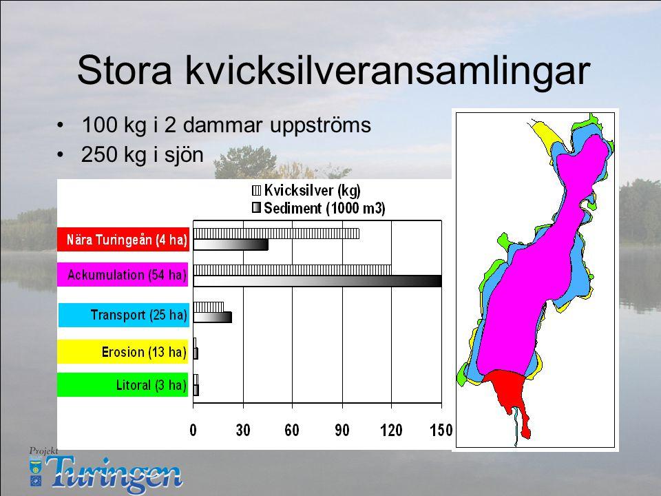 Stora kvicksilveransamlingar 100 kg i 2 dammar uppströms 250 kg i sjön