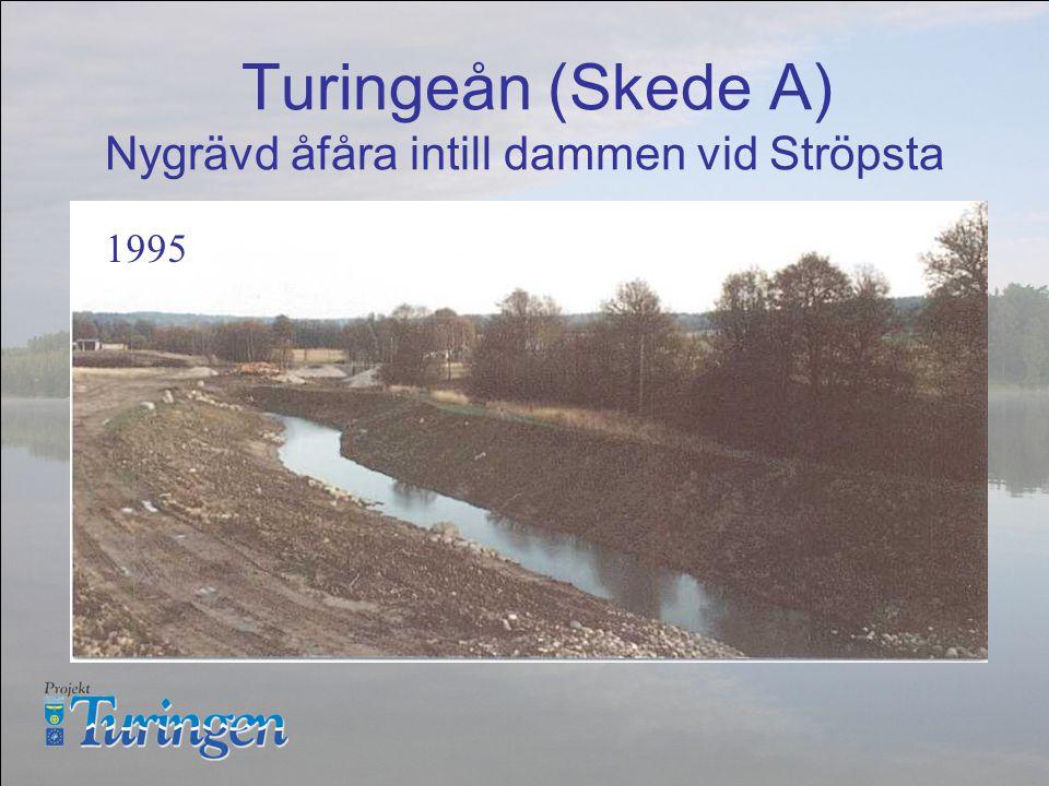 Turingeån (Skede A) Nygrävd åfåra intill dammen vid Ströpsta 1995