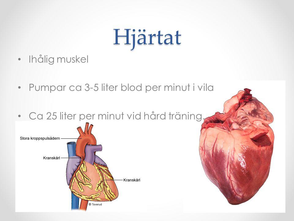 Hjärtat Ihålig muskel Pumpar ca 3-5 liter blod per minut i vila Ca 25 liter per minut vid hård träning.