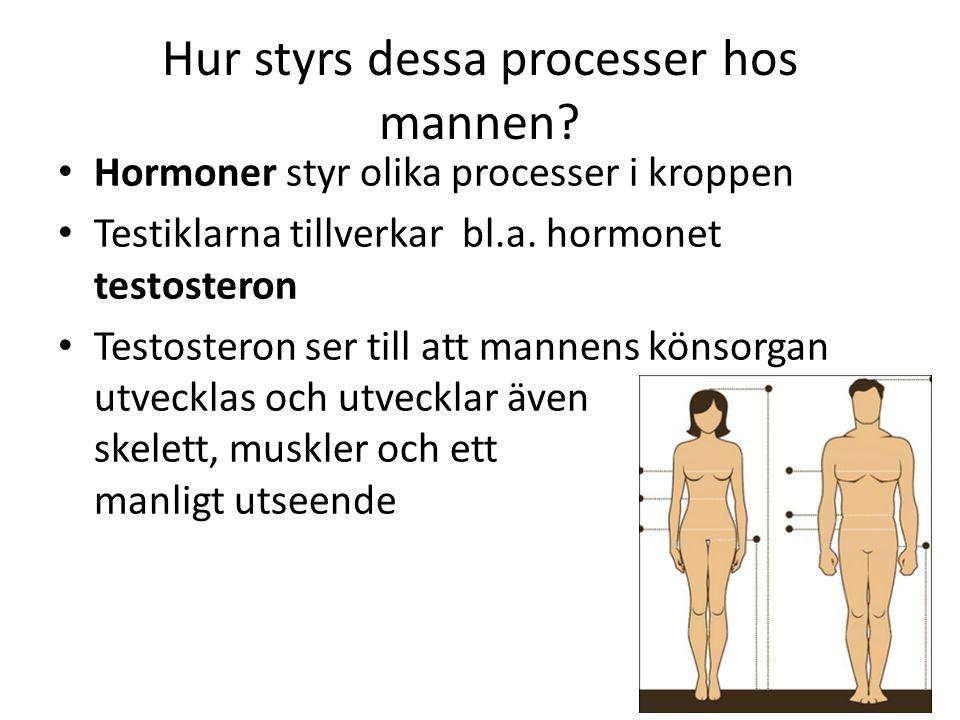 Hur styrs dessa processer hos mannen? Hormoner styr olika processer i kroppen Testiklarna tillverkar bl.a. hormonet testosteron Testosteron ser till a